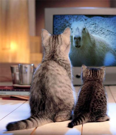 PhotoFunia:でも、ネコだけは勘弁…