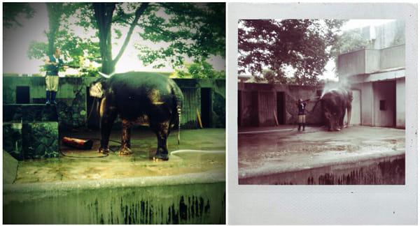 『FxCamera』アジアゾウの「はな子」。トイカメラ(左)とポラロイド(右)で撮影