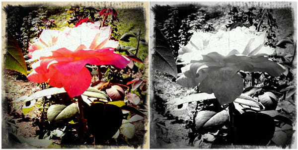 Retro Camera:LITTLE ORANGE BOXで撮影 カラー(左)モノクロ(右)