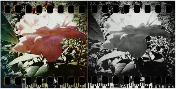 Retro Camera:pinhOle cameraで撮影 カラー(左)モノクロ(右)