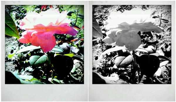 Retro Camera:xolaroid2000で撮影 カラー(左)モノクロ(右)