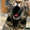 SNAP-SHOT作家FILE 猫撮り屋