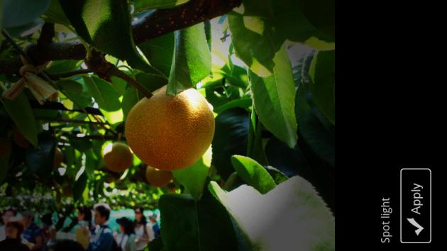 Little Photo:「Spot light」はま梨の存在感が増している