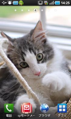 子猫成長記(ノル3ヶ月) ライブ壁紙