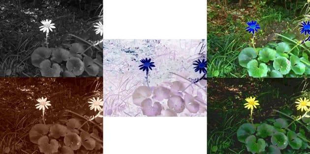DoubleShot:モノクロ(左上)、ネガポジ反転(中)、ソラライズ(右上)、セピア(左下)、ポスタライズ(右下)