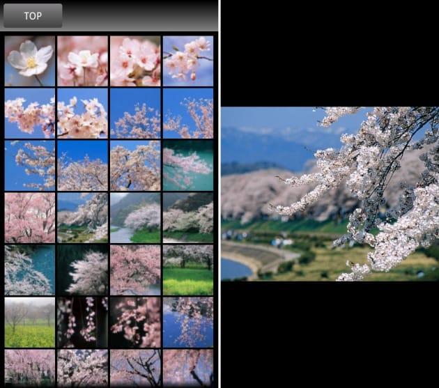 春の花木:リスト表示で気になる写真を見られる(左)写真は壁紙設定も可能(右)