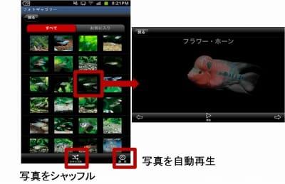 熱帯魚&水草図鑑322選:フォトギャラリー