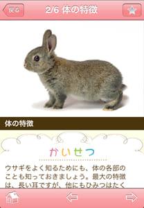 かわいい小動物図鑑:詳細ページ