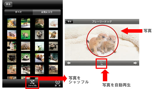 赤ちゃん動物図鑑100:フォトギャラリー