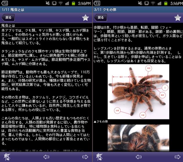 注意!鬼虫大図鑑:鬼虫とは、クモの体