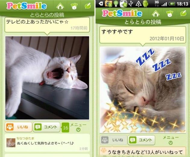 ペットスマイル:みんなの自慢の愛猫の寝顔