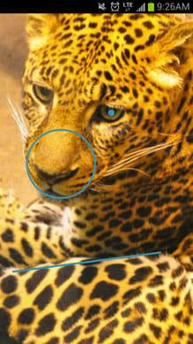 Picture Password Lockscreen:動物の写真でも設定できます。ぱっと見では全く解除できません