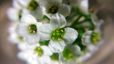 数ミリの花弁もクッキリ写る