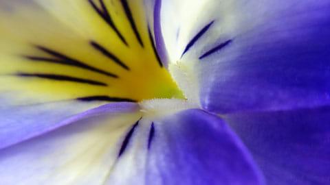 花弁の起毛部分も視認できる