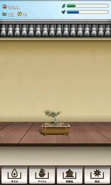 つい、盆栽。