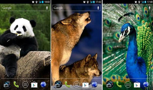 壁紙アプリ - 背景 - 画像 Backgrounds:「Panda」(左)「Wolves」(中)「Peacock」(右)から選択