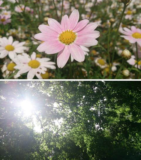 花にぐっと寄って撮影。驚くほど細かい部分まで綺麗に写っていた(左)太陽が見えるちょっと意地悪なシチュエーション。真っ暗にならずに見た目に近く、葉の緑がしっかりと再現されている(右)