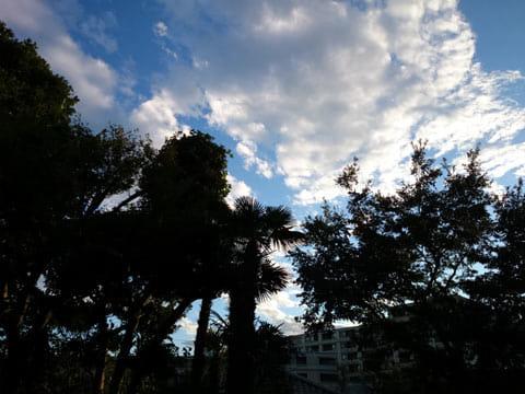 大きな木に囲まれても、空の色がクッキリと出ている