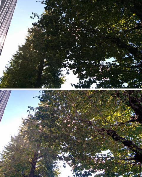 通常撮影(上)HDRで撮影。逆光でも木々の緑がしっかりと表現されている(下)