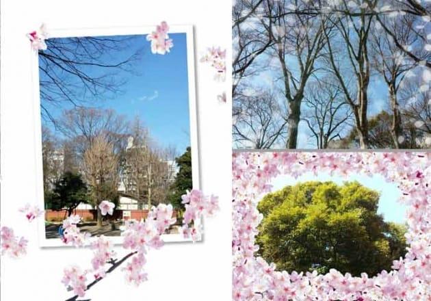 Sakura Camera 桜カメラ:絵葉書風のフレーム(左)さりげなく散りばめられた花びら(右上)敷き詰められた桜(右下)