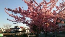 何気なく撮ってしまう桜の風景を、オシャレに仕上げよう