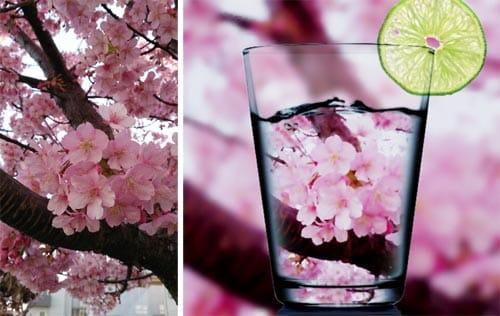 普通の桜写真を間近でパシャリ(左)「Beauty」で加工すると、グラスに入った桜のよう(右)