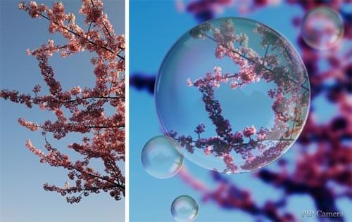 青空をバックに写った桜写真(左)「Pole」で加工すると、背景がいいアクセントになる(右)