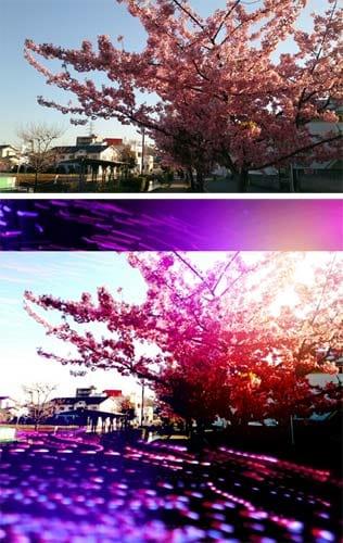 黄昏時の桜歩道の写真(上)「Light1」を使った加工写真(下)