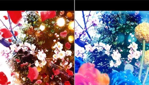 真っ赤な花びらが舞い降りる「Shower」(左)青く美しい「Blue」(右)