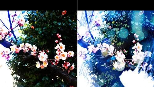 シンプルに色味を強調させる「Gokusai」(左)桜との不思議な相性が魅力の「Jellyfish」(右)
