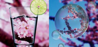 スマホを使ってお花見で撮るならコレ!美麗な桜カメラアプリ3選【Android&iPhone用】