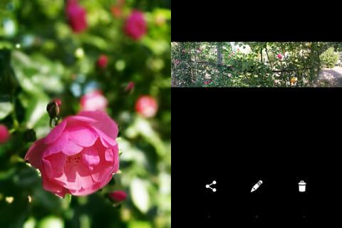 Googleカメラ:ぼかし撮影(左)パノラマ撮影(右)