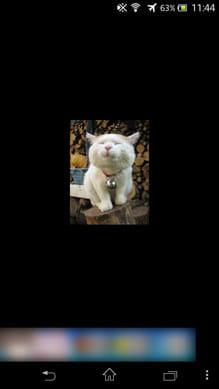 猫の声:猫は全部で18匹