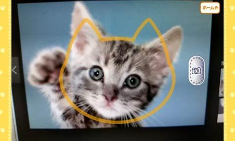 猫耳さばいばー!:猫の画像を撮影してみた