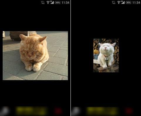 猫の声:猫をタップすると鳴き声が聞ける