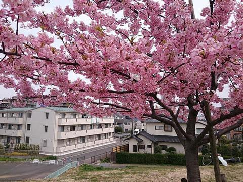 桜の木を撮ったつもりですが、背景の主張が強すぎますね