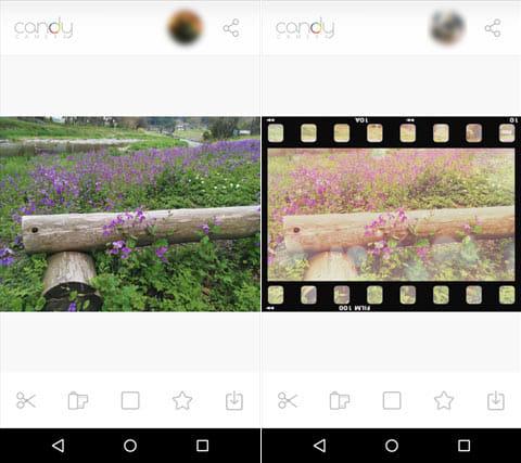 キャンディカメラ ― 自撮り、サイレント、フィルターカメラ:花の色を変えて映画のワンシーンをイメージしてみたキャンディカメラ ― 自撮り、サイレント、フィルターカメラ:花の色を変えて映画のワンシーンをイメージしてみた