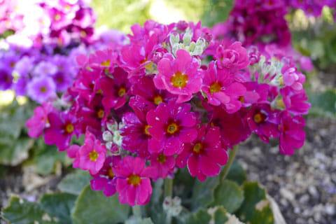 花をマクロモードで撮影。周りが良い感じにボケ気味