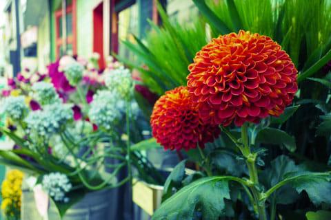 背景ボケで手前の花がより鮮明に:ISO感度125、絞り3.2、シャッタースピード1/125 (3)