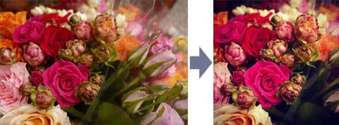 花の写真:オリジナル(左)『Instagram』で加工(右)