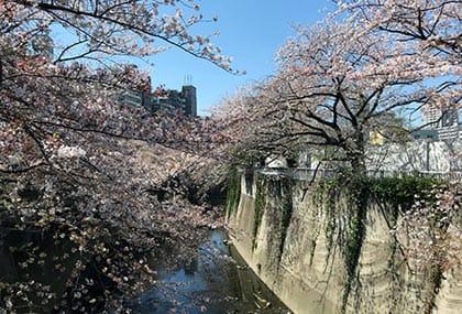 ふてくされてもう一度、神田川の桜を撮影していたら、ドローン撮影をしている人を発券!中央のがドローンだが、おわかりいただけるだろうか