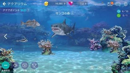 サメと一緒の水槽で大丈夫?