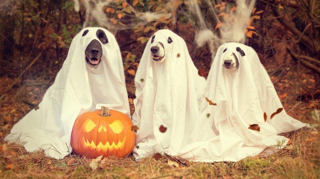 pixabay:Alexas_Fotos_halloween