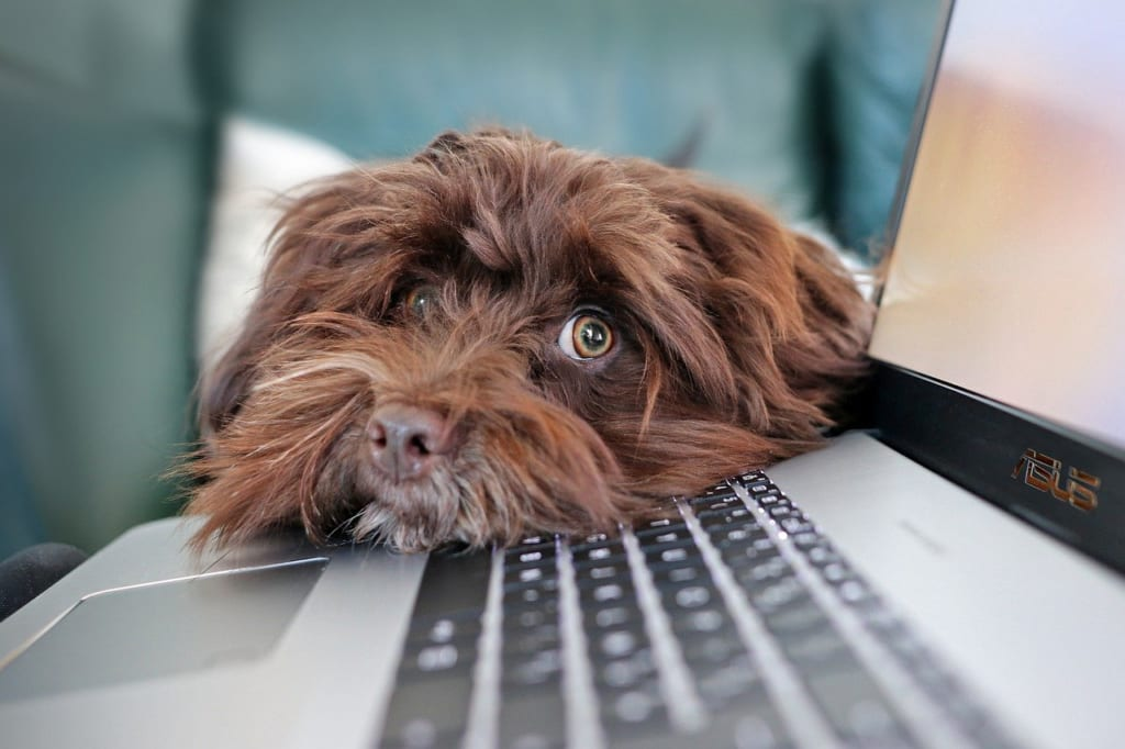 pixabay:MarlyneArt_dog
