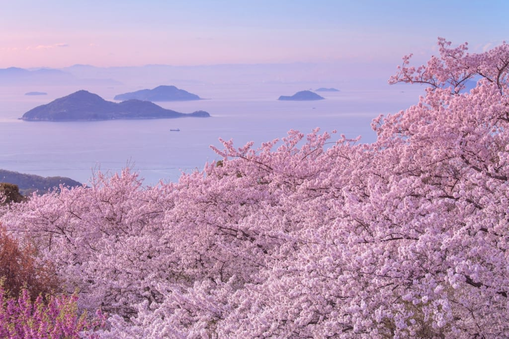 桜ドローンプロジェクト イメージ